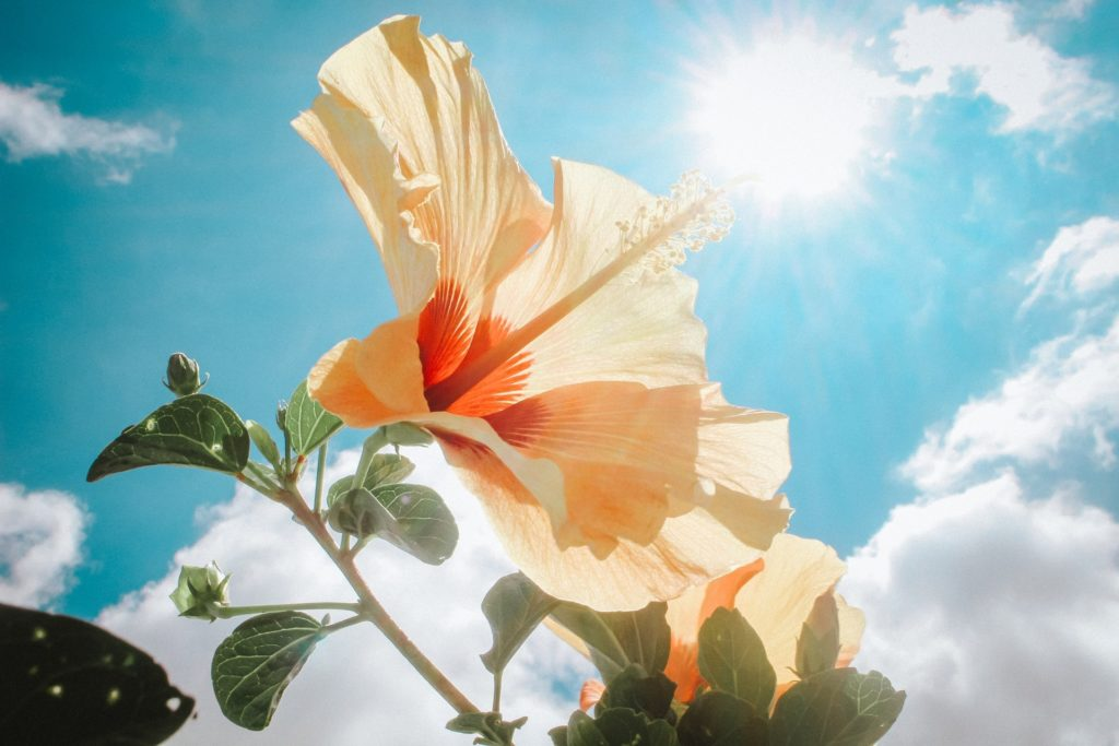 Gul blomma mot himlen