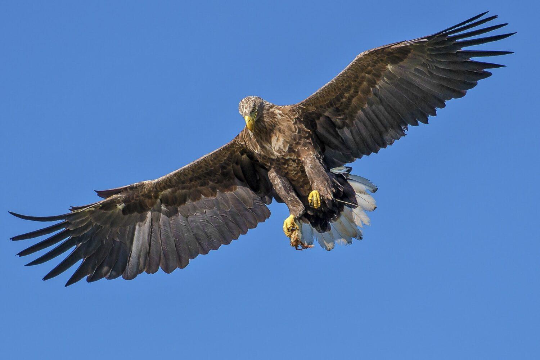 Eagle to heaven